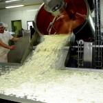 Ostemassen med vallen hældes ud og fordeles. Mælken kommer  fra lokale besætninger.
